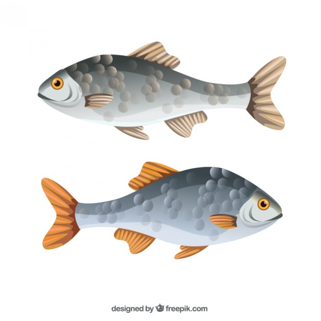 fishes_23-2147516484
